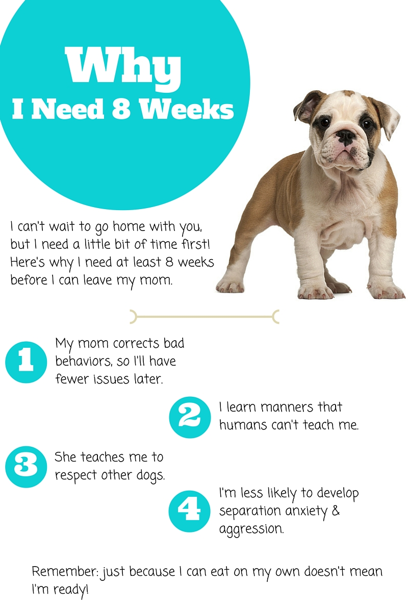 Why your puppy should be at least 8 weeks old