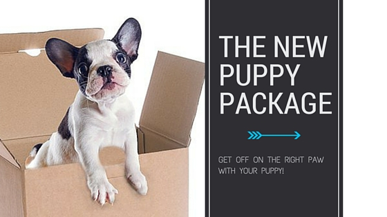 The New Puppy Package from Elite Bulldog
